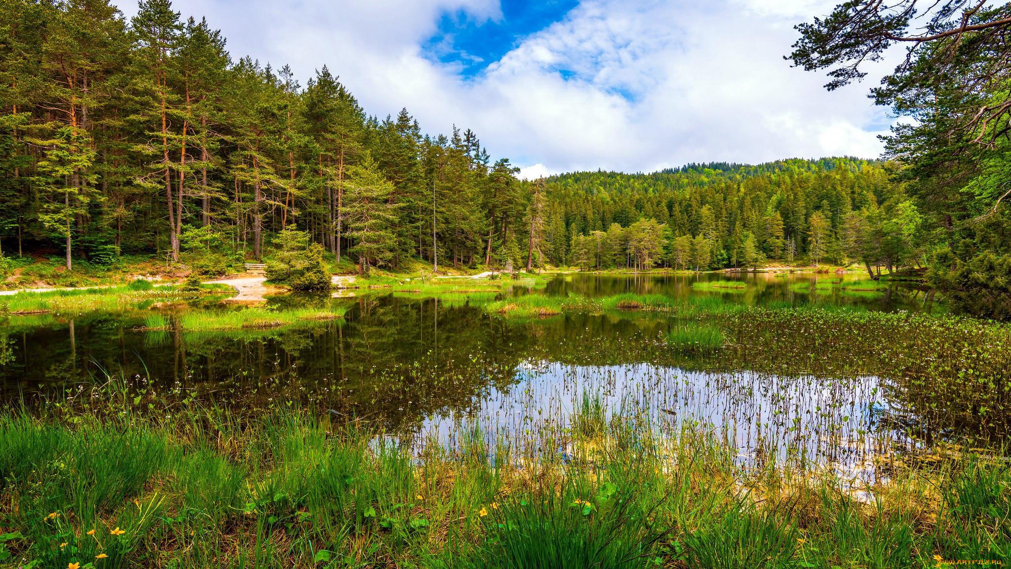 природа, реки, озера, лес, пруд, трава